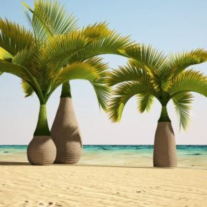 Bottle Palm 3